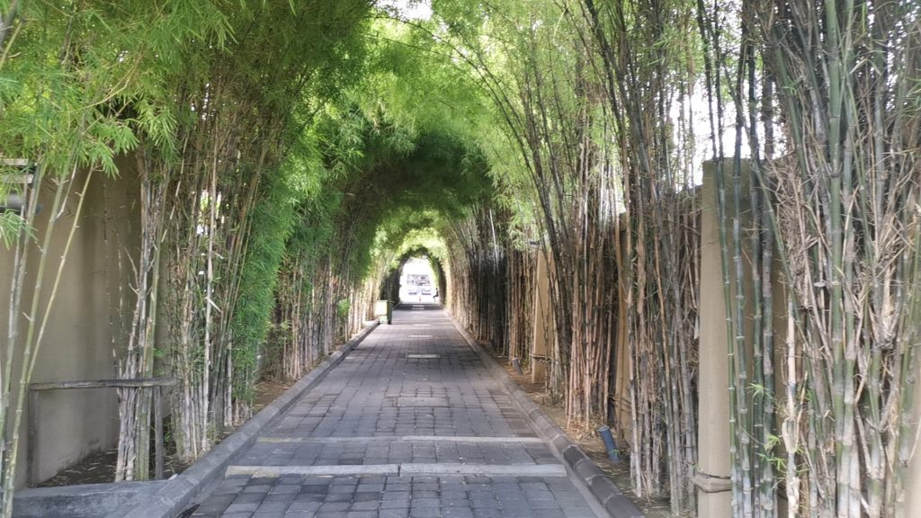 ホテルに向かう竹の道